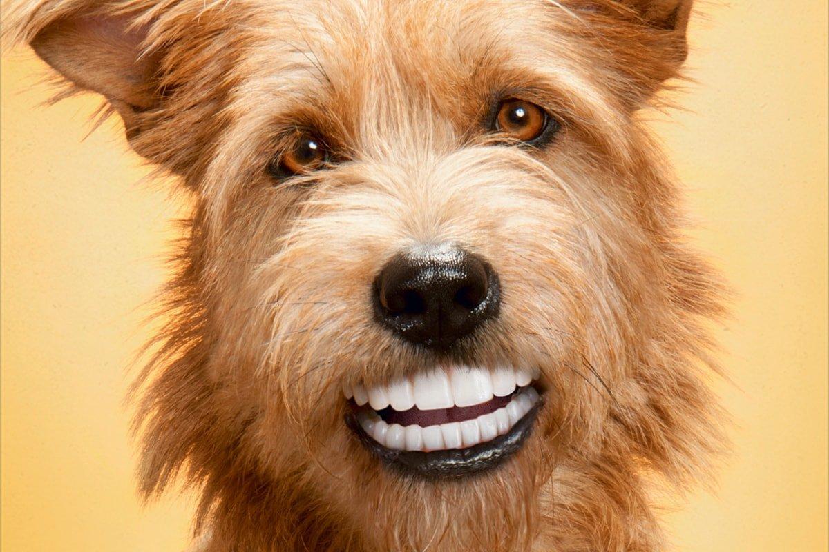 Удаление зубного камня и налета у собак и кошек ультразвуком
